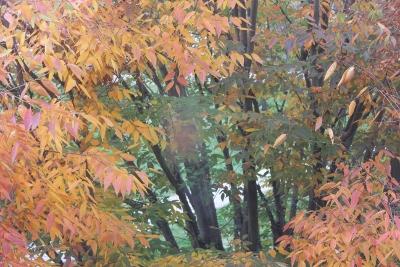 Some McDaniel fall foliage as viewed from DMC (Daniel McClea Hall) two years ago.
