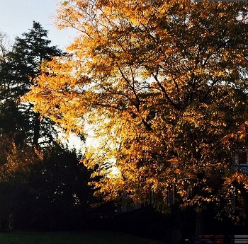 Friday was a beautiful fall day at McDaniel--perfect for a fall visit day.